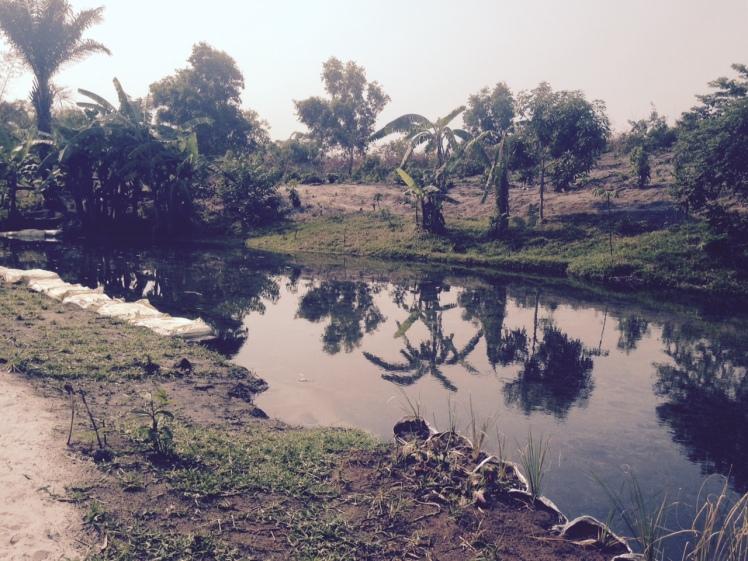 Les pieds dans l´eau Kinshasa